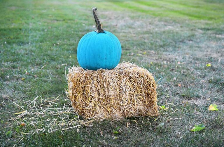 A teal pumpkin indicates a house that is giving out allergy-safe items to children with allergies on Halloween. Credit: Christine Leavenworth