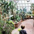 Hidden Gems: Lamberton Conservatory