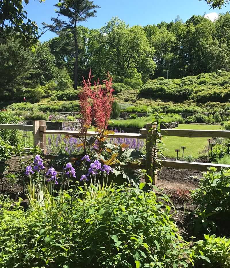 Cornell Botanical Garden Garden Ftempo