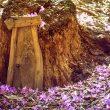 Hidden Gems: Tinker Nature Park