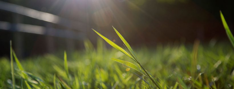 Blades of grass and sun