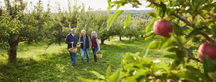 Picture of a family apple picking